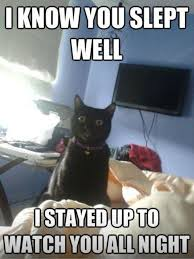 Feel The Love Meme - 7 best favorite cat memes images on pinterest cats funny animals