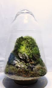 131 best terra nova images on pinterest terrariums miniature