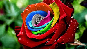 Different Color Roses Amazing Roses Youtube