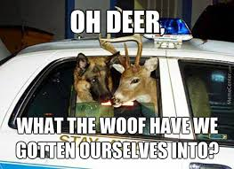 Oh Deer Meme - oh deer i think that s dr sheperd from grey s anatomy by