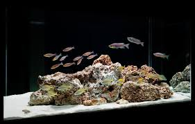 cichlid aquarium design design ideas photo gallery