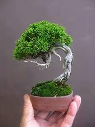 tiny trees http lomets