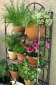 gem se pflanzen balkon mischkultur im garten und auf dem balkon tinto bloggt