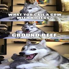 Pun Husky Meme - 15 pun husky meme jokes are insanely cute dose of funny funny memes