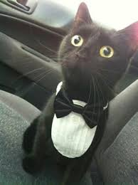 Cat Suit Meme - my prom date for sure as long as i got my suit and tie prom