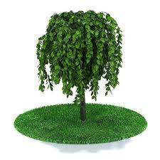 3d leafed small tree cgtrader
