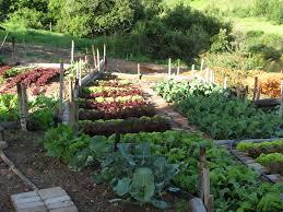planning vegetable garden layout garden design small garden design backyard vegetable garden