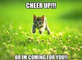 Mere Cat Meme - these cheer up memes are sure to raise a smile best wishes and