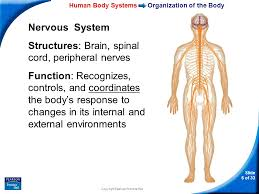 Human Anatomy And Body Systems 35 U20131 Human Body Systems Slide 1 Of 33 Copyright Pearson Prentice