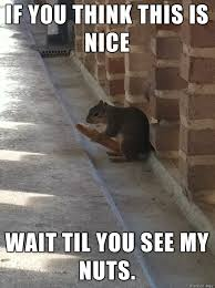 Rat Meme - dirty tree rat meme on imgur