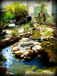 koi ponds gallery sublime water gardens