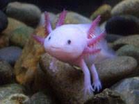 live tropical aquarium fish freshwater ornamental fishes marine
