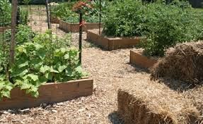 summer soil mulch and compost tips university of maryland extension