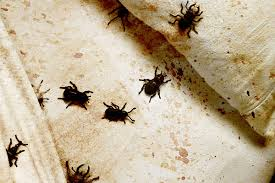 Can Bed Bugs Live In Water Look For These Signs Of Bed Bugs Terminix