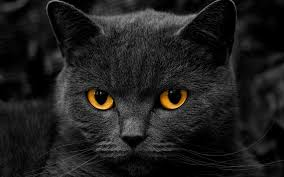 Barn Cat Names Black Cat Wallpaper 1920x1200 74501