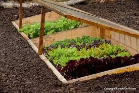 how to tend a vegetable garden best idea garden