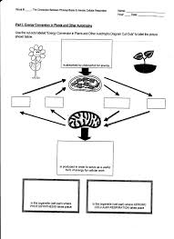 photosynthesis and respiration worksheet free worksheets library