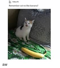 Angry Cat No Meme - fistlycuffs remember cat no like banana aw banana meme on me me