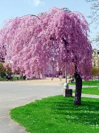 one more pink tree by 21 on deviantart