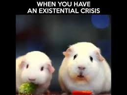 Guinea Pig Meme - when you have a existential crisis guinea pig youtube