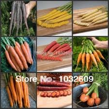 Chinese Root Vegetables - 450pcs mix 9 colors carrot seeds vegetables organic chinese