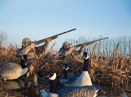 Mallards Duck Blind Shotgun Tips How To Shoot From A Layout Blind Outdoor Life