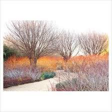 Chc Winter Garden - 1175 best my garden images on pinterest backyard ideas garden