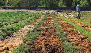 mulch your weeds and grass u2014the right way hobby farms