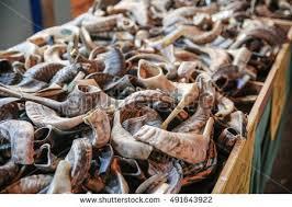 shofar horns shofars rams horns religious artefacts stock photo 491643922