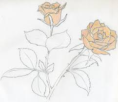 rose sketch you will enjoy