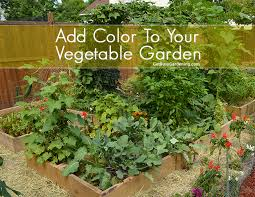 color to your vegetable garden