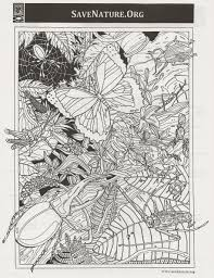 detailed coloring pages adults save nature insect lab
