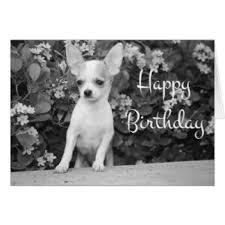 happy birthday chihuahua puppy cards happy birthday chihuahua