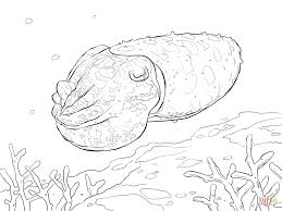 broadclub cuttlefish coloring free printable coloring pages