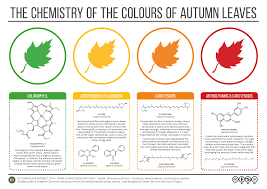 why leaves change color in the fall the student conservation