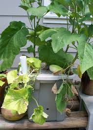 learn how to make your own vegetable container garden
