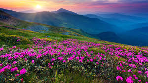 mountain flower live wallpaper android apps on google play