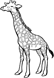 line drawings giraffe coloring book at creative picture coloring