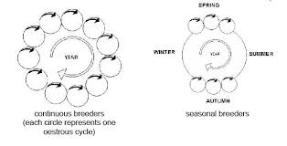 anatomy and physiology of animals reproductive system wikibooks