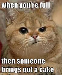 Cake Meme - 122 best cake memes images on pinterest funny pics funny stuff