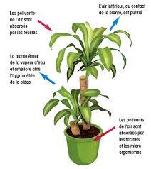 plante d駱olluante chambre 16 plantes dépolluantes jardiner avec jean paul
