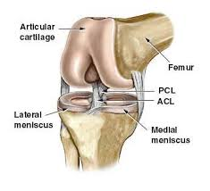 Anatomy Of Knee Injuries Common Knee Injuries Signs Symptoms And Treatment Of Acl And