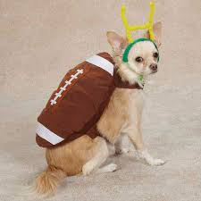 Cute Small Dog Halloween Costumes 396 Cute Animals Images Pet Costumes Costume