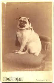 119 best pug images on pinterest vintage dog postcards and pug