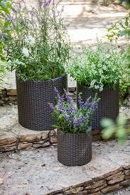 garden pots australia photo album keter indoor outdoor rattan style garden planters 3 size set