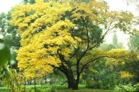 landscaping with unique and uncommon trees