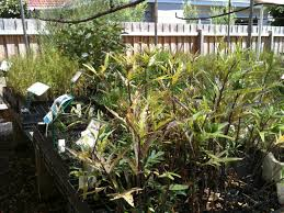 gondwana wholesale native plant nursery australia native plant nursery melbourne home design u0026 interior design