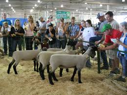 quotes about family judging livestock judging contest aug 4 4 h lancaster county