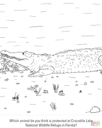 reptiles coloring pages free coloring pages