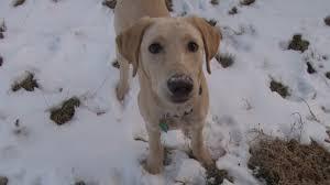 wyoming pet laws